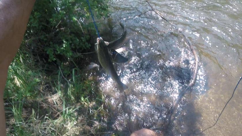 stringerOfish